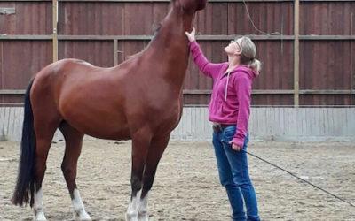 Hof Pferdeweisheit in Arnsberg – Eindrücke und Erlebnisse